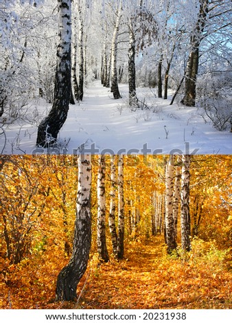 Two season. Birch alley. Autumn and winter - stock photo