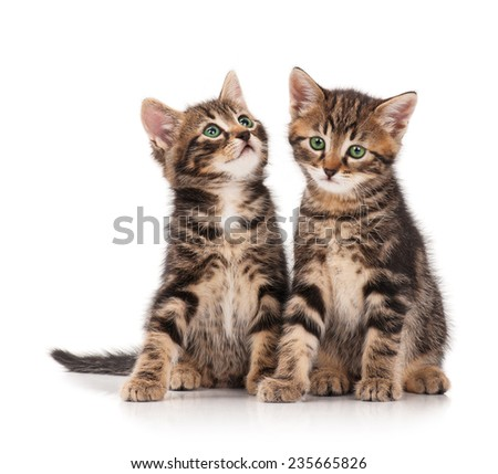 Two serious cute kittens isolated on white background cutout - stock photo
