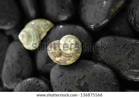 Two shell and wet stones