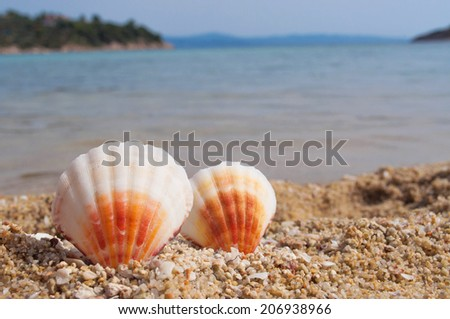Two shells on the beach - stock photo