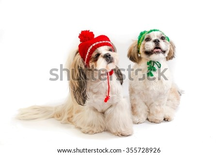 Two shih-tzu mom and her son in winter hats - isolated on white