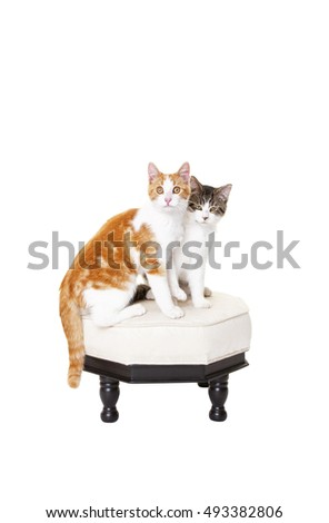 Two short haired kittens sitting together on a stool.  Shot on white background.