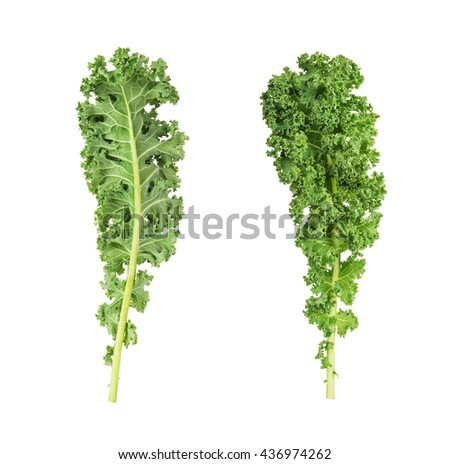 two sides of fresh green kale leaves vegetable  isolated  on white background