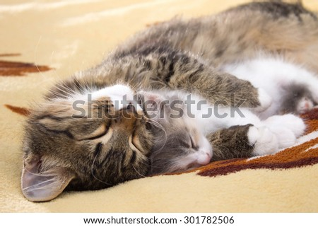 two sleeping kitten on the bed