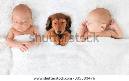 two Sleeping newborn babies with a dachshund puppy. - stock photo