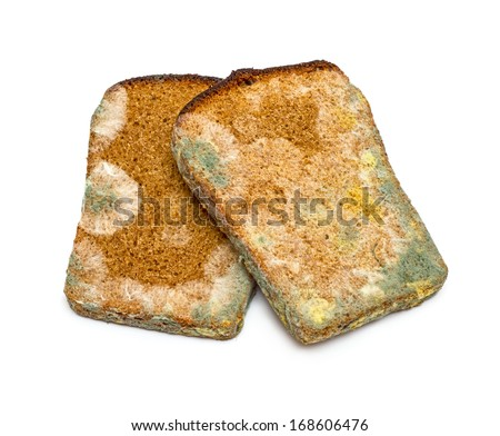 Two slices of mouldy rye bread isolated on white background - stock photo