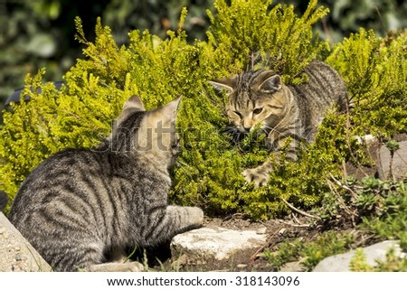 Two small cats playing in nature