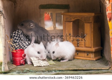 Two small hamsters read the paper. Imagine room in a small magic home. - stock photo