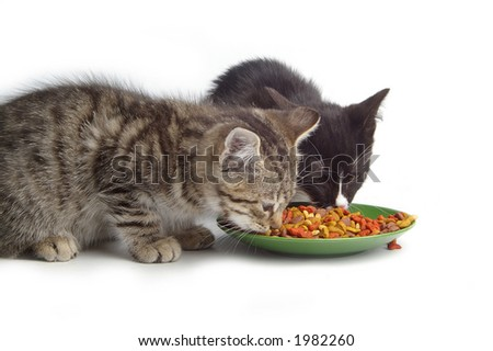 Two small kittens eating dry cat food.