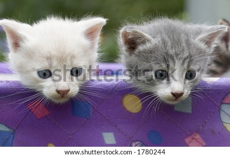 Two small kittens in a baby carriage - stock photo