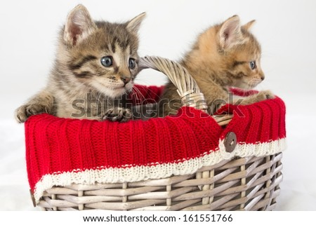 Two small kittens in a wicker basket - stock photo