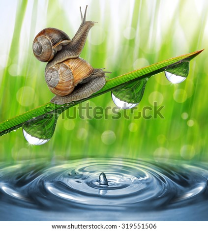 Two snail on dewy grass close up. Nature background. - stock photo