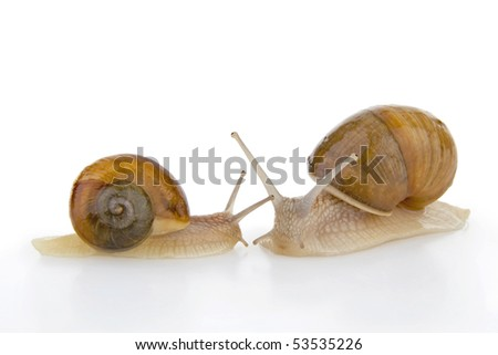 Two snail, on white background.