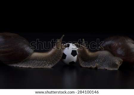 two snails with a soccer ball