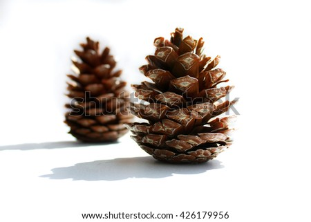 Two spruce cones on a white background  - stock photo