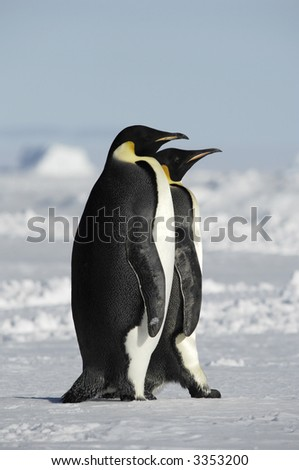 Two standing emperor penguins in a beautiful Antarctic pack ice scenery. Picture was taken near the tip of the Peninsula during a 3-month Antarctic research expedition. - stock photo