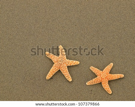 Two Starfish on a Wet Sandy Beach