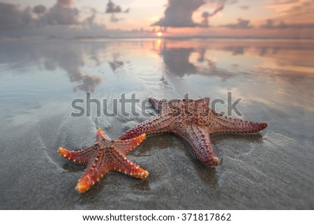Two starfish on summer beach at sunrise - stock photo
