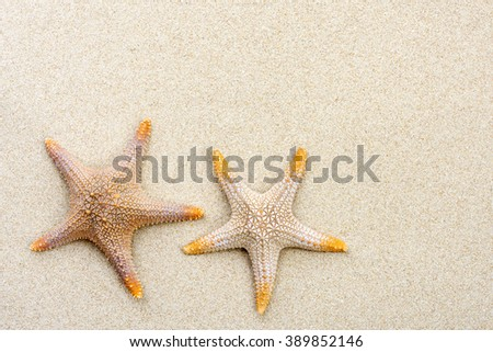 Two Starfish on the Beach with Windswept Sand Ripples - stock photo