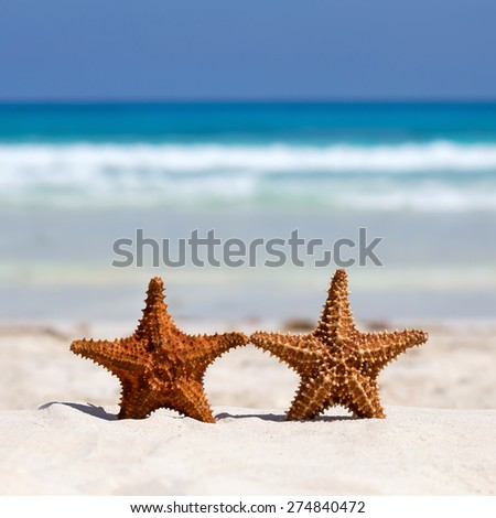 Two starfishes on caribbean sandy beach, travel concept