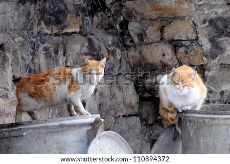 Two stray cats sit on garbage bins in the European city - stock photo