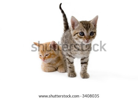 two striped kittens standing on a white background