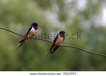 two swallows on a wire - stock photo