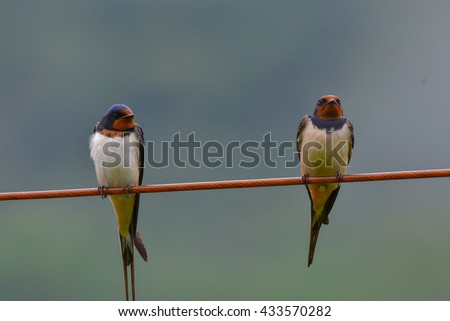 two swallows on wire - stock photo