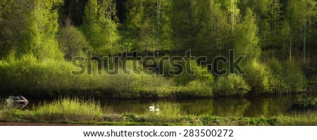 two swans in an old beautiful nature surrounding, Sweden - stock photo