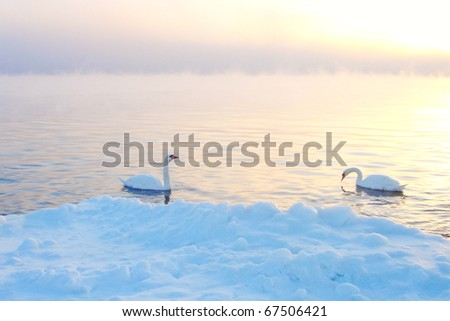 Two Swans In Winter - stock photo