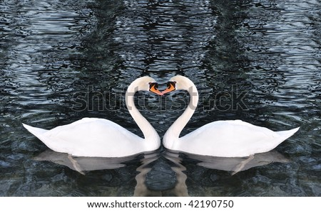 Two swans making a shape of heart - stock photo