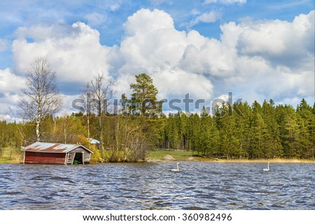 Two swans swim in the lake near the coastal rural settlement.Beautiful natural landscape.Panoramic view.The land of lakes.Finland.Europe. - stock photo