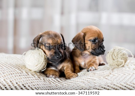 Two sweet puppy