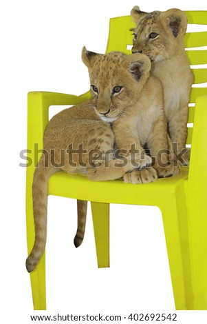 two tiger cub on a white background - stock photo