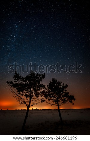 Two trees are growing together on the background of the starry sky and the Milky Way. - stock photo
