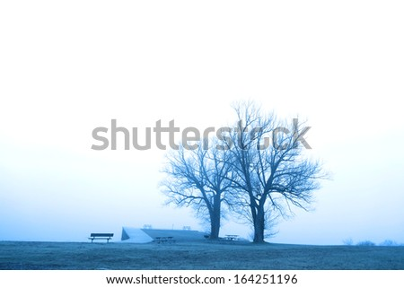 Two trees by the frozen lake on a misty day - stock photo