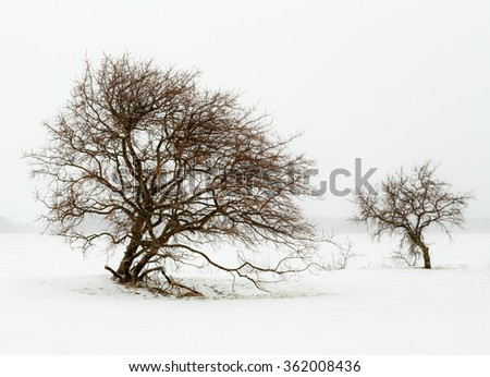 Two trees in a snowfall on seashore.
