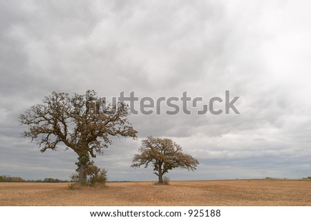 Two trees in field on stormy day