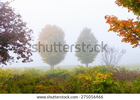 Two trees in the fog on an autumn morning, Stowe, Vt, USA - stock photo