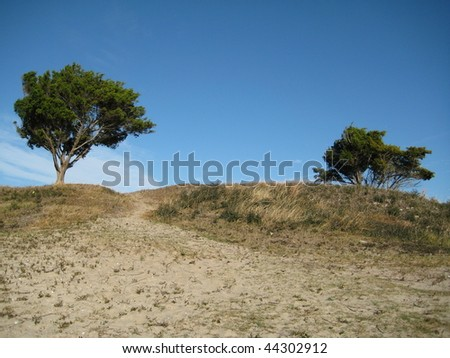 Two Trees on a Hill - stock photo