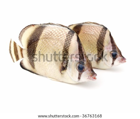 Two tropical fish on white background - stock photo