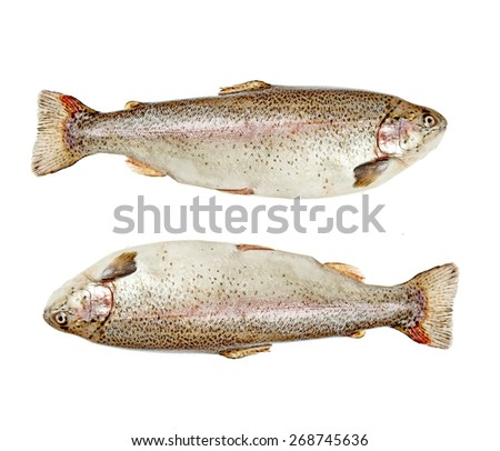 Two trouts isolated over white background - stock photo