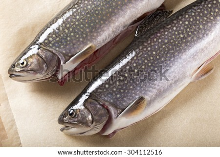 Two trouts on brown background made from paper - stock photo