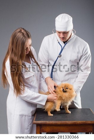 Two vets with phonendoscope holding cute pomeranian dog. - stock photo