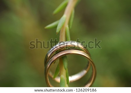 two wedding golden rings on branch - stock photo