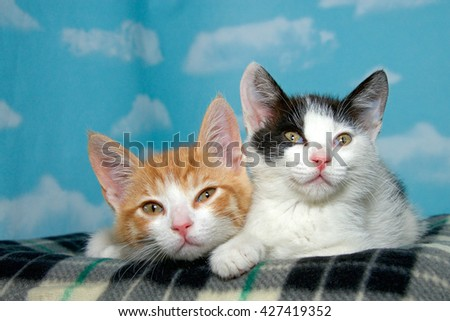 Two 8 week old kittens on a checkered blanket with blue background white clouds. Orange and white short haired tabby black and white short haired tabby. Tired sleepy kitties. - stock photo