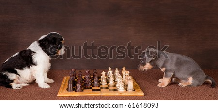 Two 6 weeks old puppy dogs playing chess - stock photo