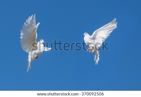 Two white doves flying against the blue sky - stock photo
