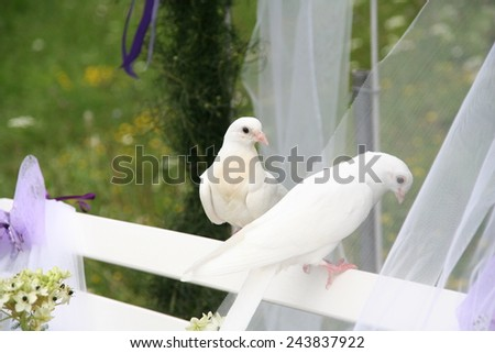 two white doves on a white bench in a wedding ceremony - stock photo