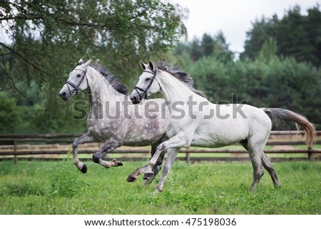 two white horses running on a field